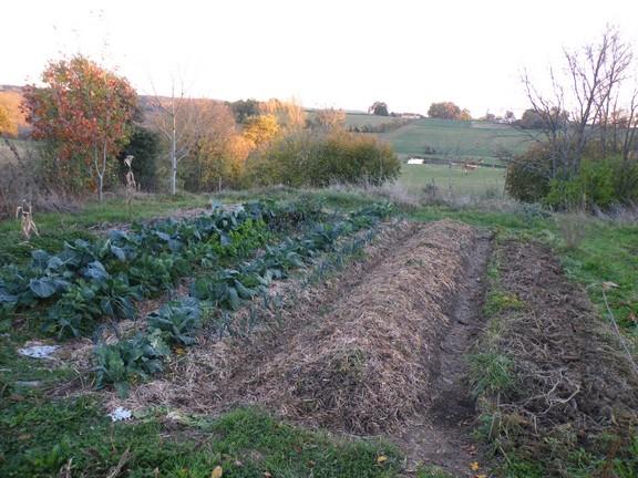 Permaculture graine de flibuste for Culture sur butte permaculture