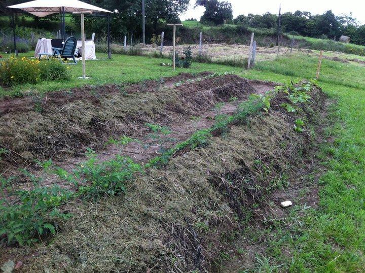 Permaculture graine de flibuste for Permaculture terrasses et buttes