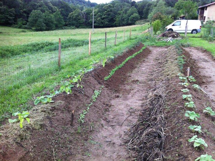 Buttes au tracteur graine de flibuste for Permaculture terrasses et buttes